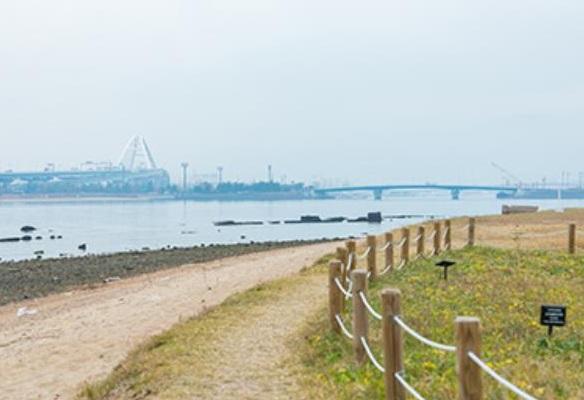 甲子園浜の画像
