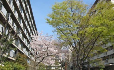 UR桜田団地の家賃・環境・評判は?